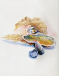 shells_coloredpencils_web